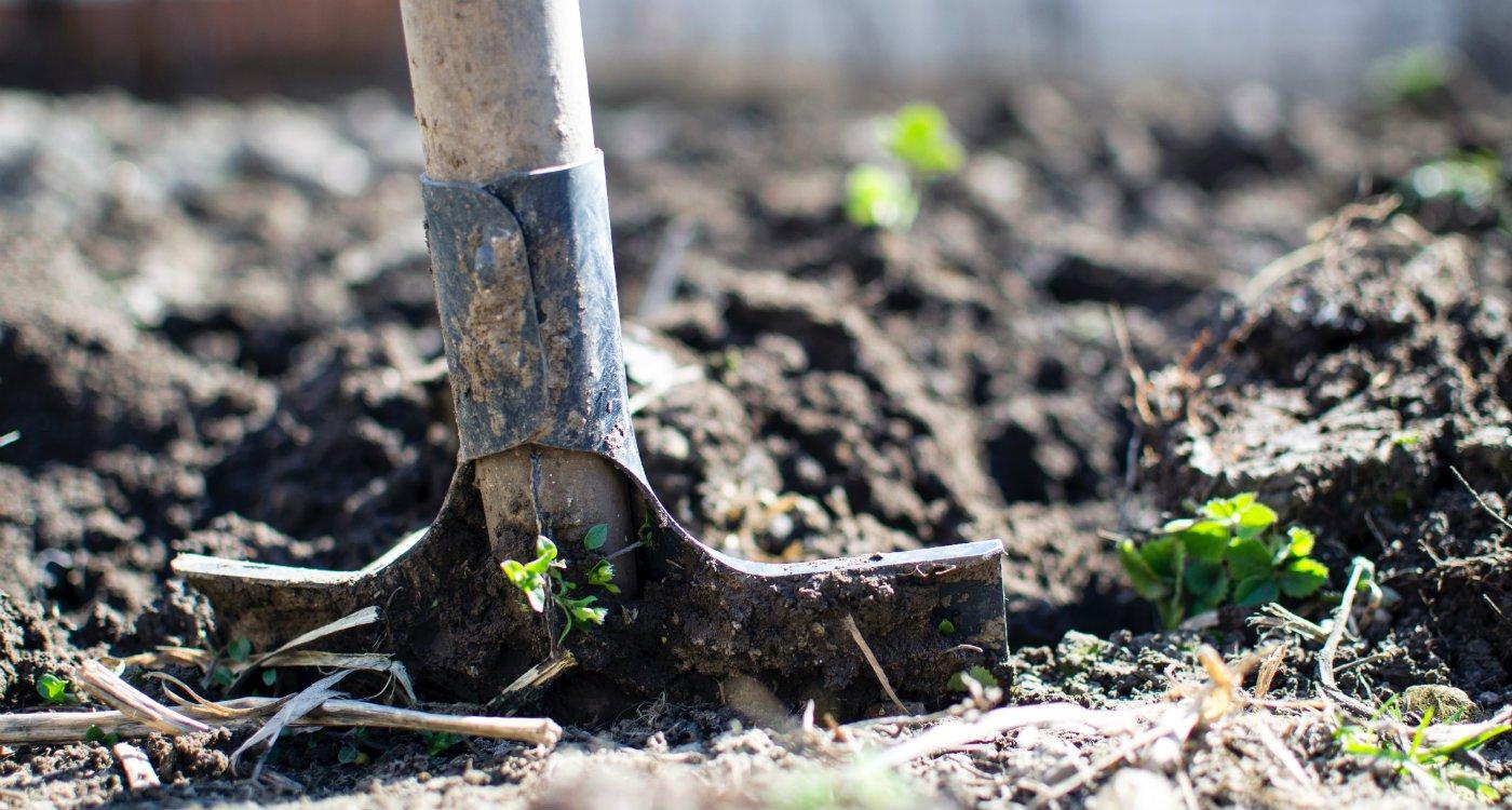 Gardening in May.jpg