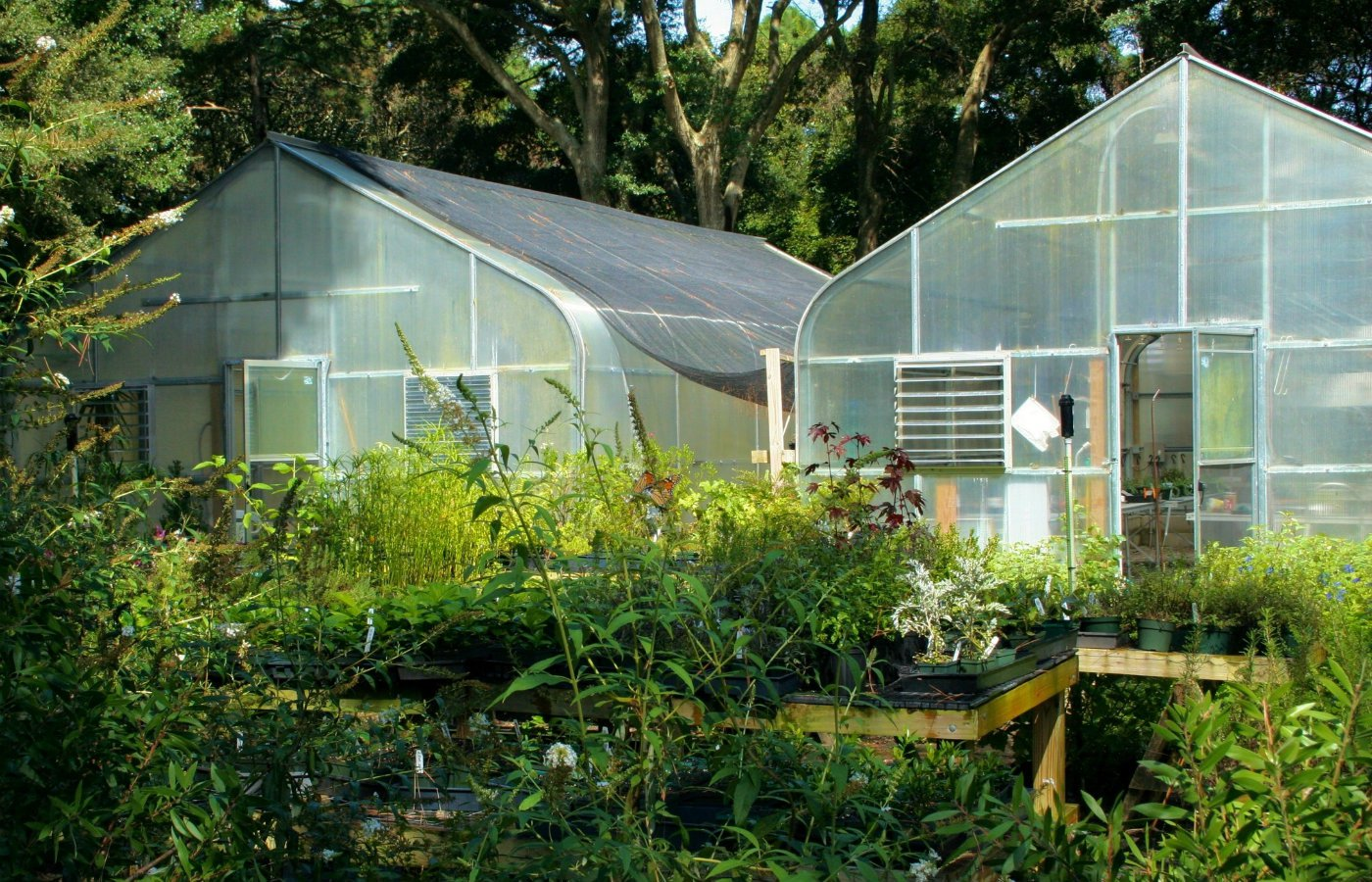 Prepare your garden for spring greenhouse cleaning.jpg