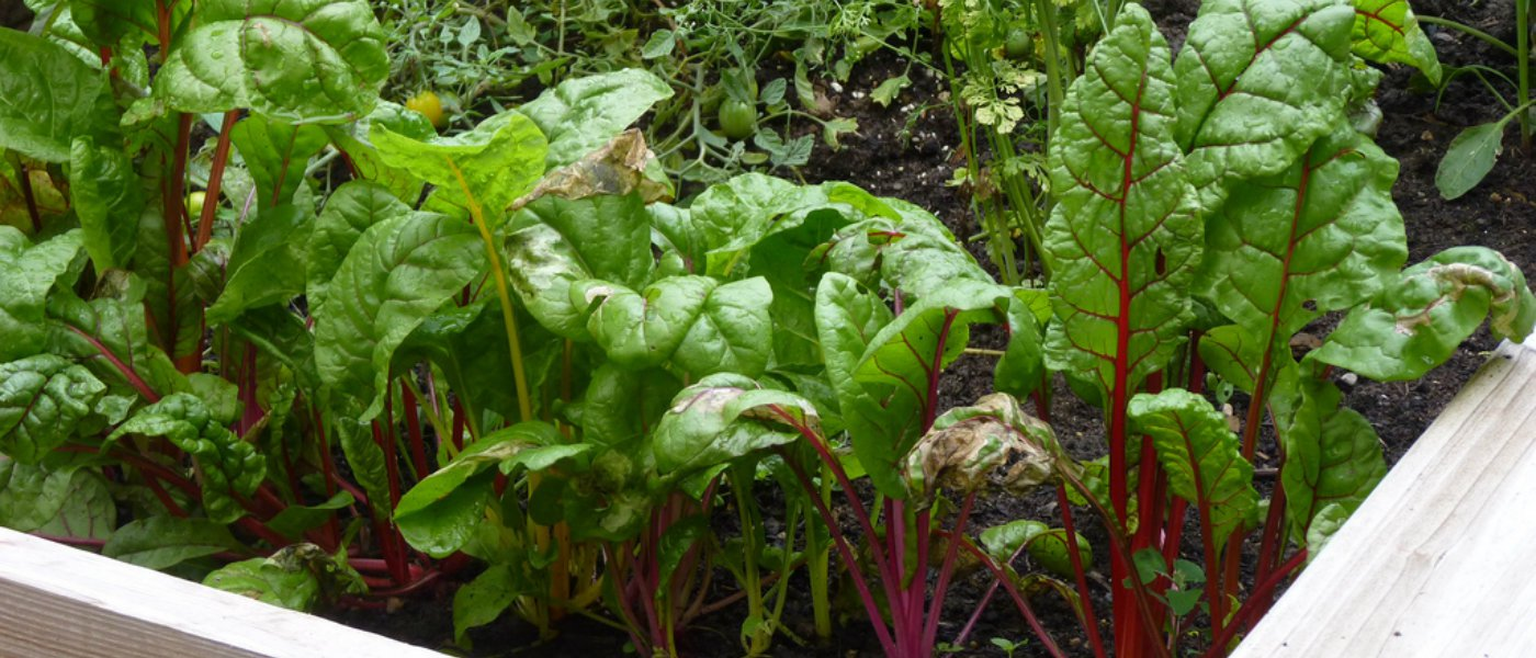 What to Plant in Your Garden in August