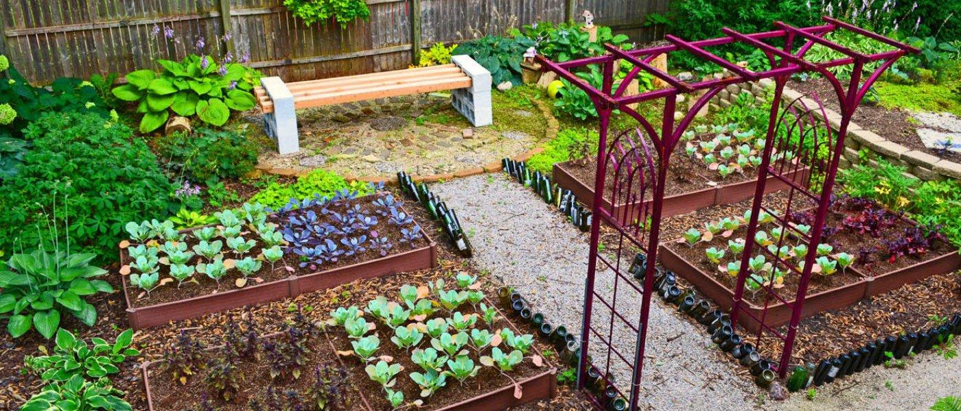 Garden in august in a garden - Garden In August In A Garden 42