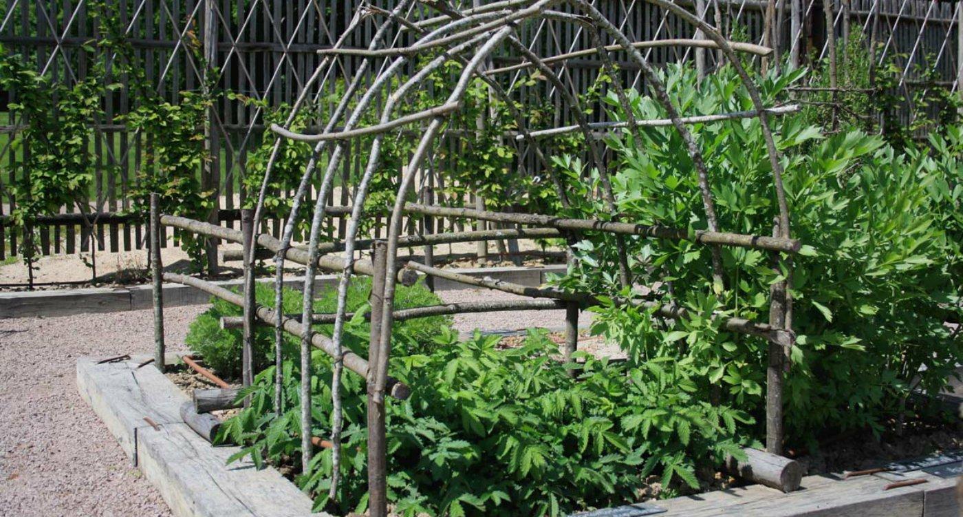 Gardening August