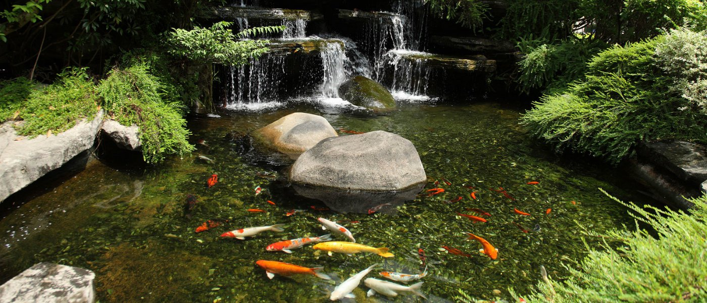 How to remove a pond for Koi pond removal