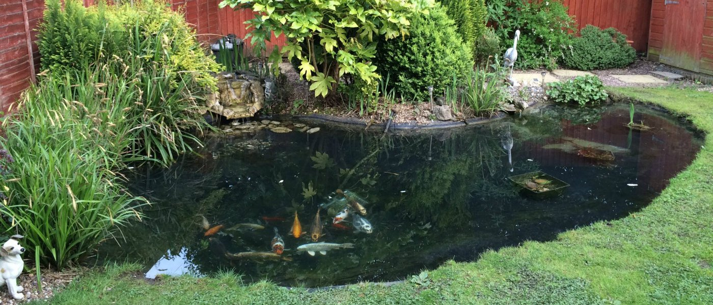how to remove a pond