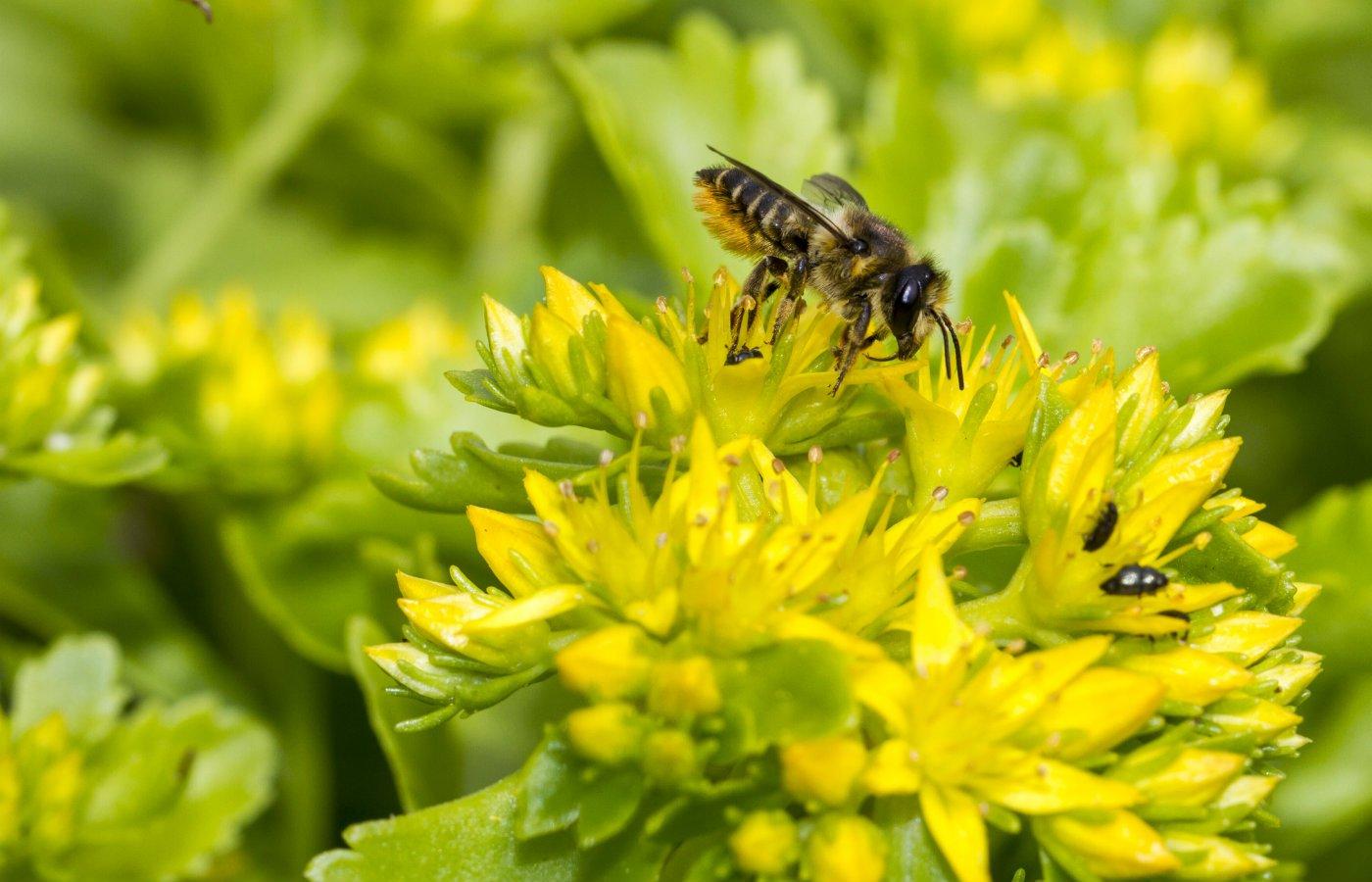 prepare your garden for spring pests wildlife.jpg