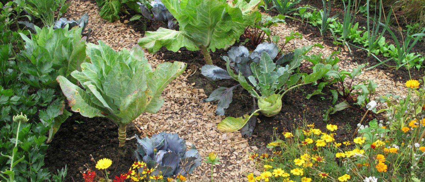 Gardening September